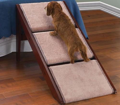 notizie animali, notizie divertenti, notizie strane, notizie commoventi, cani, scale per cani, rampe per cani, letti, divani
