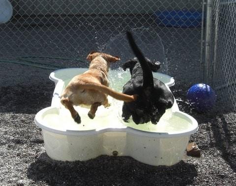 Piscine Per Cani A Forma Di Osso E Di Zampa Coda Vispa