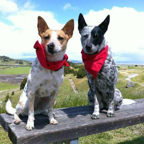 notizie animali, notizie divertenti, notizie strane, notizie commoventi, cani, bandana protettiva per cani, parassiti, insetti, zanzare, formiche, pulci, zecche, repellente anti-insetti
