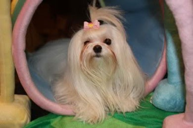 Percorso a ostacoli portatile per cani di piccola taglia for Nomi per cagnolini di piccola taglia