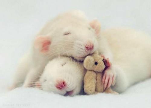 notizie animali, notizie divertenti, notizie strane, notizie commoventi, topi, topolini, Jessica Florence, Anne Geddes, fotografie di animali, fotografie di topi