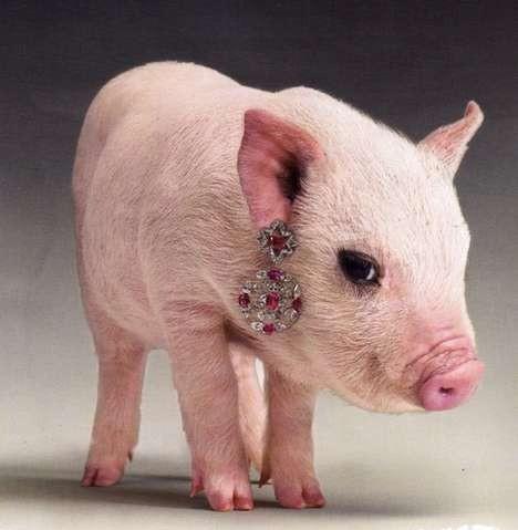 Amato Un maialino indossa gioielli per una campagna su Vogue Russia  MI72