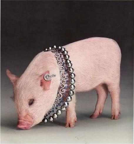 Favoloso Un maialino indossa gioielli per una campagna su Vogue Russia  CW74