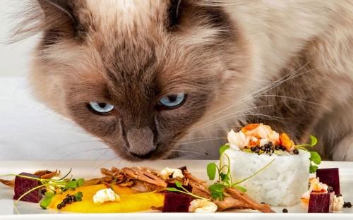 notizie animali, notizie divertenti, notizie strane, notizie commoventi, gatti, felini, cibo per gatti, Simon Rimmer