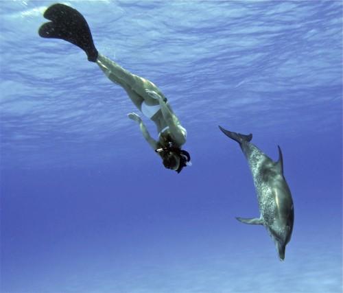 Hayden Panettiere difende delfini e balene