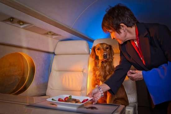 Aereo Privato Cani : Compagnia aerea offre voli dedicati a cani e gatti