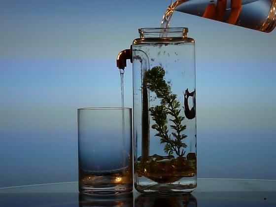 acquario autopulente che contribuisce al benessere dei