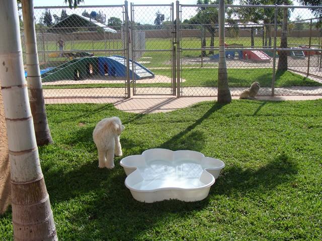 Piscina Per Cani Da Giardino Idee Per La Casa