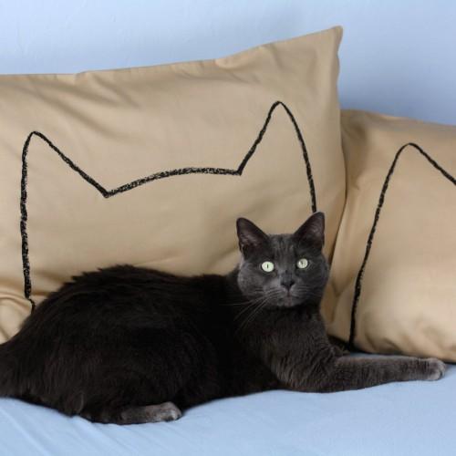 notizie animali, notizie divertenti, notizie strane, notizie commoventi, cani, gatti, uccelli, federe con la silhouette di animali