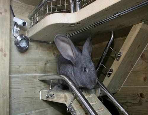 Casetta di lusso per due conigli inglesi vanity farm for Conigliera da interno