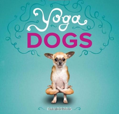 notizie animali, notizie divertenti, notizie strane, notizie commoventi, cani, gatti, yoga per cani, yoga per gatti, calendari con animali