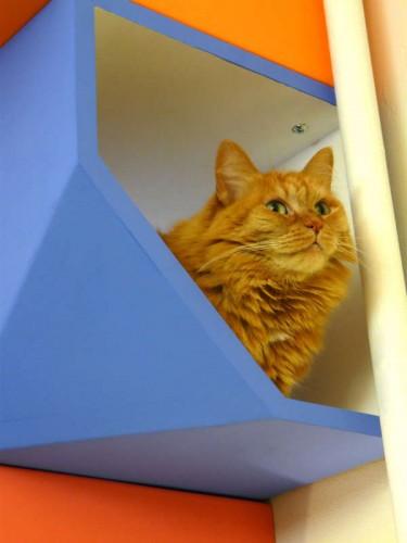notizie animali, notizie divertenti, notizie strane, notizie commoventi, gatti, casette per gatti, cucce per gatti, cucce di design, Catissa