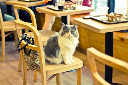 notizie animali, notizie divertenti, notizie strane, notizie commoventi, gatti, cat café, locali pet friendly